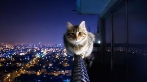 Çok-Tatlı-Kedi-Köpek-Resimleri-5